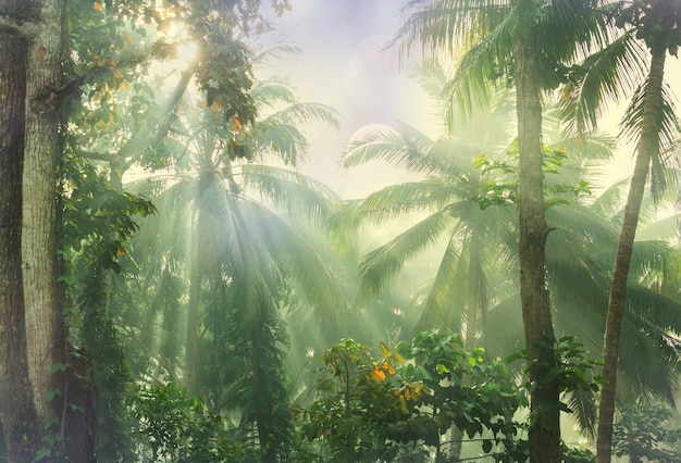 Bela selva tropical verde