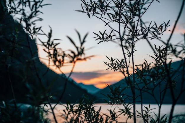 Bela silhueta de galhos de árvores no lago alpino embaçado ao amanhecer. água calma vívida do lago da montanha em cores do nascer do sol no borrão. cenário incrível com água colorida na manhã ensolarada.