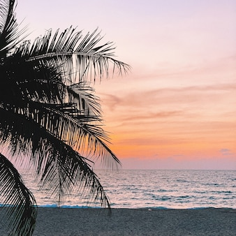 Bela silhueta de uma palmeira de coco tropical em uma praia vazia com pôr do sol colorido com cores rosa laranja e roxas vigorosas