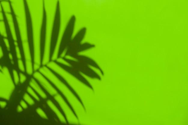 Bela sombra das folhas de uma palmeira em um fundo verde. fundo tropical verde brilhante de verão. copie o conceito mínimo de espaço. postura plana