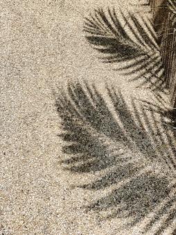 Bela sombra de ramos de coqueiros tropicais