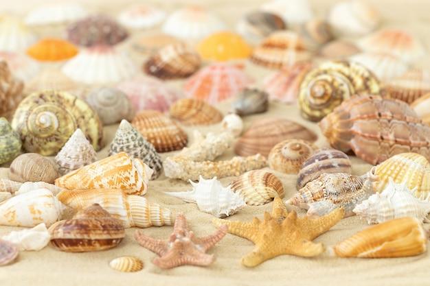 Bela superfície de conchas do verão