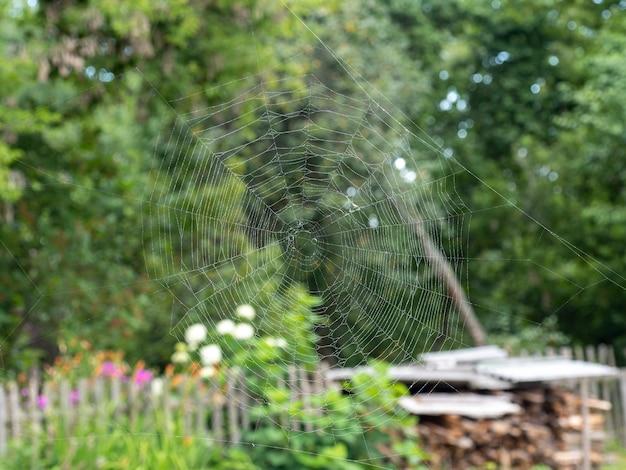 Bela teia de aranha com close-up de gotas de água. no fundo, uma paisagem borrada de verão