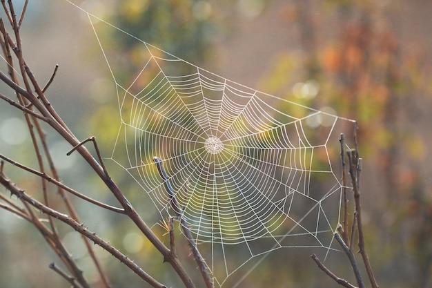 Bela teia de aranha no início da manhã
