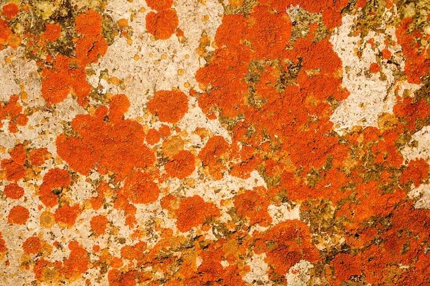 Bela textura colorida abstrata para o fundo com musgo vermelho em uma pedra branca de cor brilhante ...