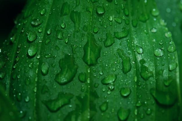Bela textura de folha verde com gotas de água depois da chuva de perto