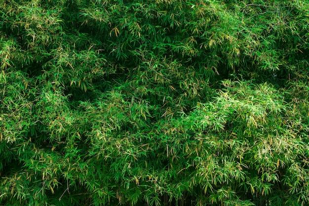 Bela textura de folha verde para o fundo