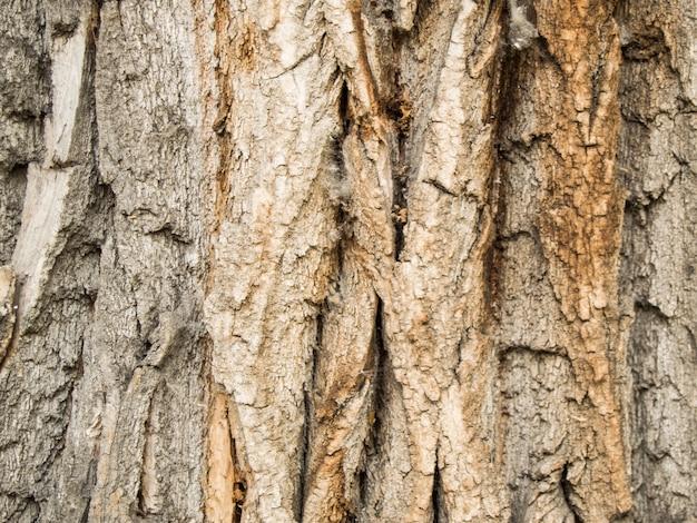 Bela textura escura da casca de árvore, fundo