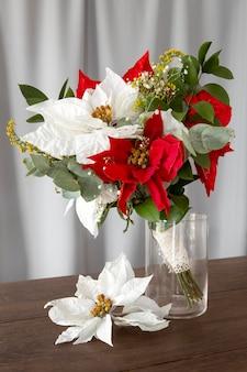 Bela variedade de poinsétia vermelha e branca