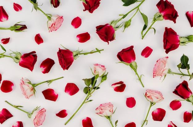 Bela variedade de rosas vista superior