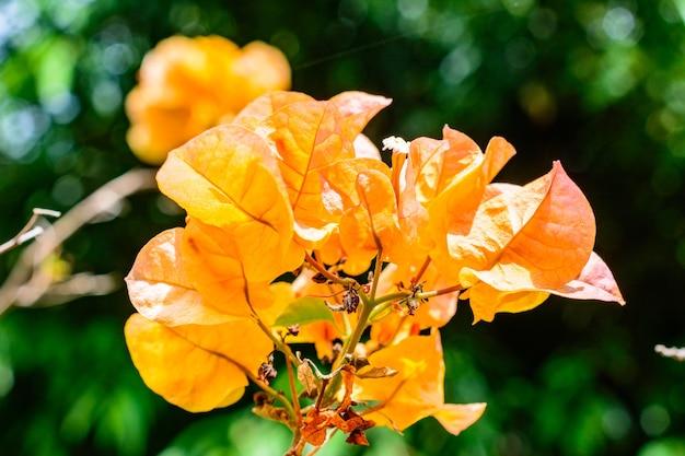 Bela vegetação, árvores, flores, lagos e lagoas no famoso parque tropical bai lu gong yuan, na cidade de sanya. ilha de hainan, china.