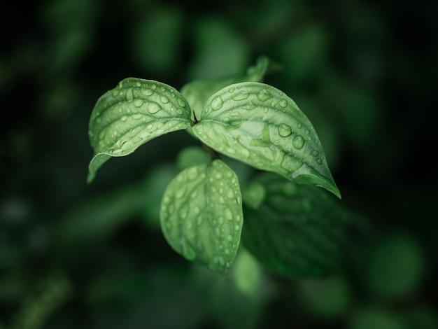 Bela vegetação verde com gotas de água