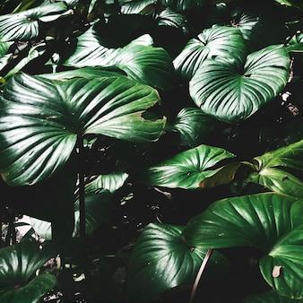 Bela vegetação