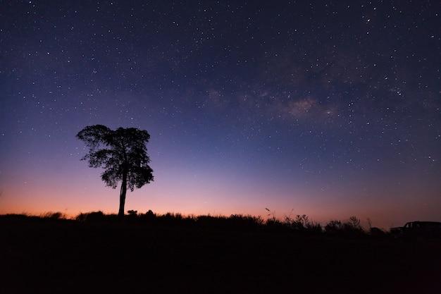 Bela via láctea e silhueta da árvore em um céu noturno antes do amanhecer