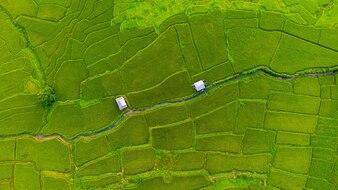 Bela vista aérea de campos de terraço de arroz e cottage