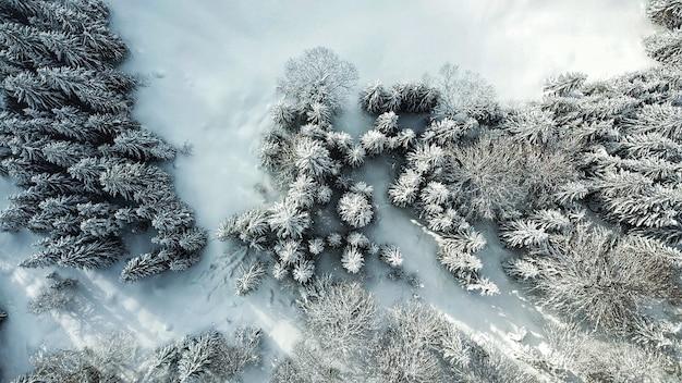 Bela vista aérea de uma floresta com árvores cobertas de neve durante o inverno