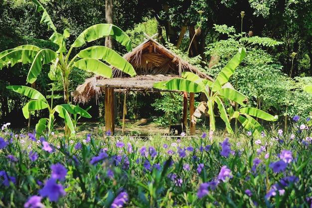 Bela vista da cabana de madeira na fazenda tropical com árvores de banana e campos de flores roxas