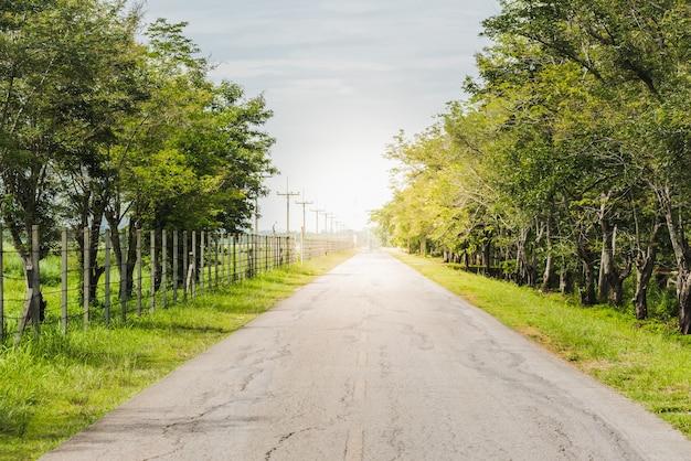 Bela vista da estrada rural forrada com árvores