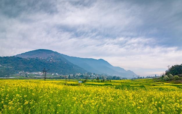 Bela vista da fazenda musterd em kathmandu, nepal.