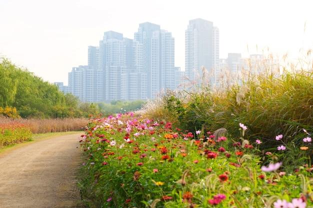 Bela vista da flor e do plano de fundo do edifício em seul, coreia, pela manhã