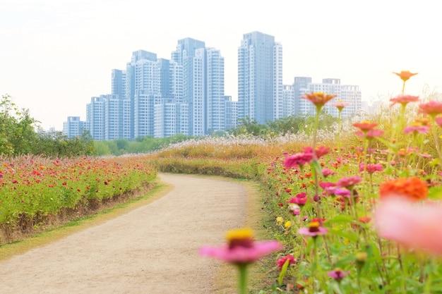 Bela vista da flor e do plano de fundo do prédio em seul, coreia