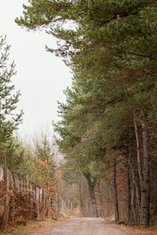 Bela vista da floresta à luz do dia