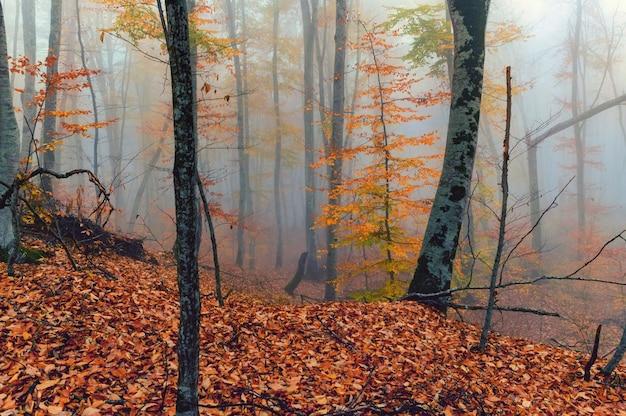 Bela vista da floresta nebulosa com folhas douradas nas montanhas de outono