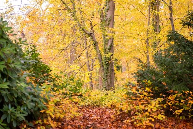 Bela vista da floresta no outono