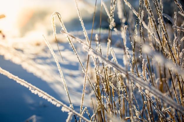 Bela vista da grama seca coberta pela neve em um dia ensolarado