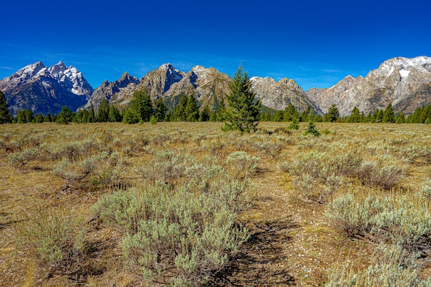Bela vista da montanha grand teton no parque nacional de grand teton nos eua