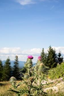 Bela vista da natureza à luz do dia