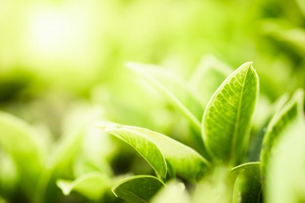 Bela vista da natureza verde folhas no fundo da árvore turva vegetação com luz solar