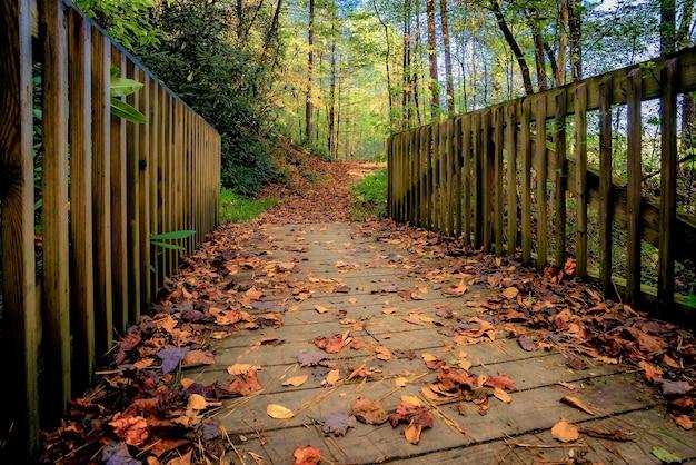 Bela vista da vegetação e uma ponte na floresta - perfeita para o fundo