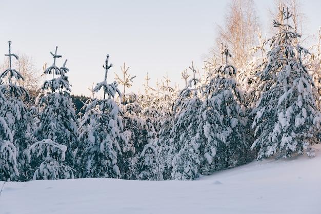 Bela vista das árvores cobertas de neve em uma colina completamente coberta de neve