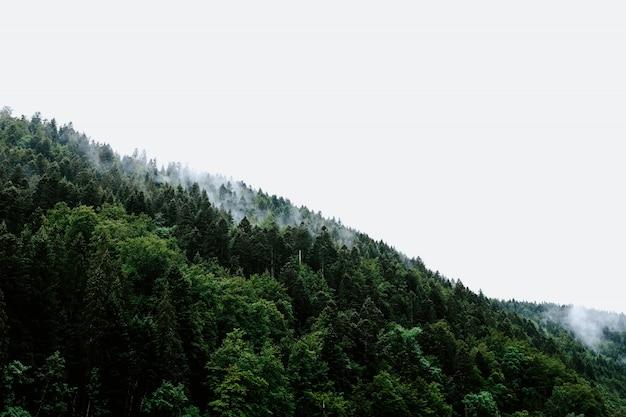 Bela vista das árvores em uma floresta chuvosa no tempo nevoento
