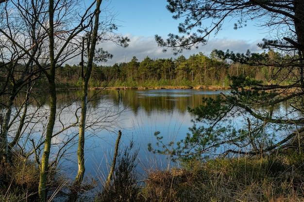 Bela vista das árvores em uma floresta perto do lago