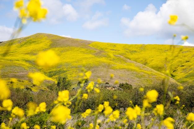 Bela vista das colinas cobertas de flores na costa central da califórnia, gaviota, eua