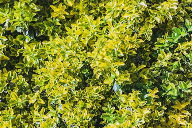 Bela vista das folhas verde-amarelas de uma planta