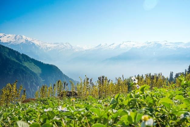 Bela vista das montanhas em um dia ensolarado