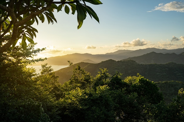 Bela vista de árvores verdes com colinas e céu na foto de fundo
