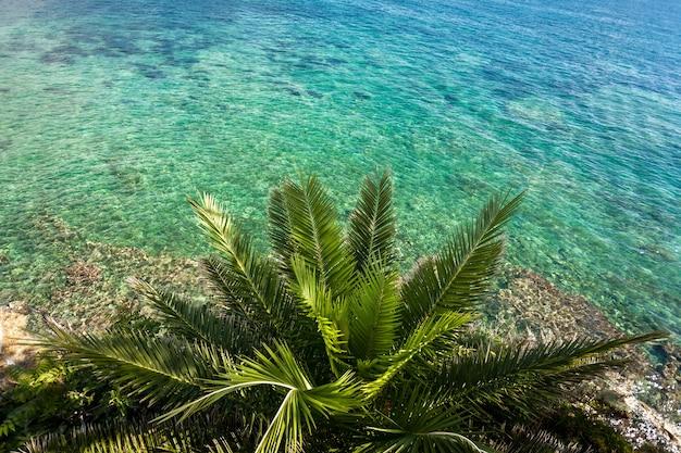 Bela vista de cima de uma grande palmeira crescendo na praia do mar