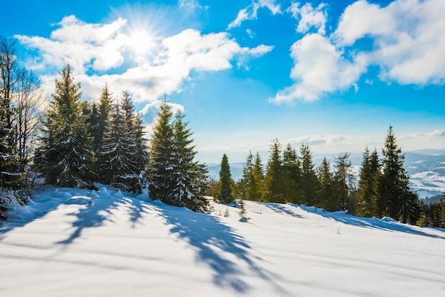 Bela vista de majestosos abetos verdes crescendo em uma colina no inverno