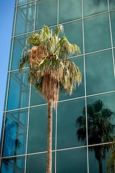 Bela vista de palmeiras altas crescendo em um prédio moderno com grandes janelas