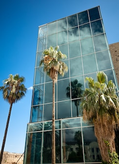 Bela vista de palmeiras altas refletindo nas janelas do arranha-céu