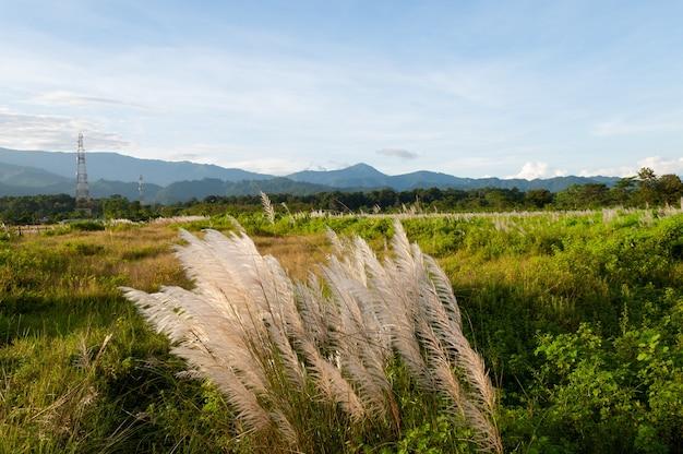 Bela vista de plantas crescendo no prado com montanhas ao fundo