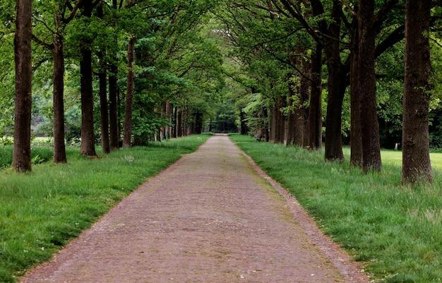 Bela vista de um caminho rodeado por árvores verdes em um parque