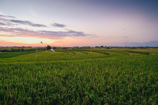 Bela vista de um campo coberto de grama verde capturado em canggu, bali