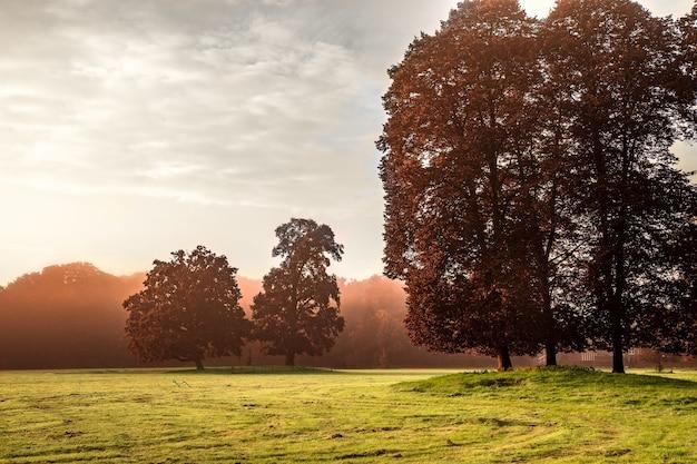 Bela vista de um parque coberto de grama e árvores ao nascer do sol