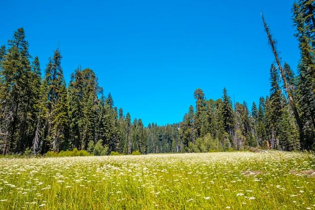 Bela vista de um parque nacional