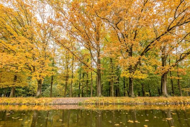 Bela vista de um parque repleto de árvores e um lago em um dia ensolarado